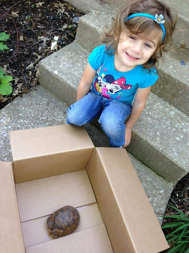 Earlier in the week we found a box turtle!  We watched it for about 10 minutes and then set it free! :)
