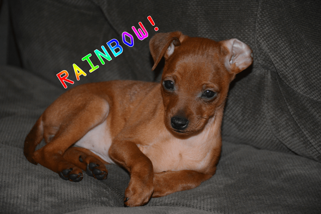 Dog Named Rainbow