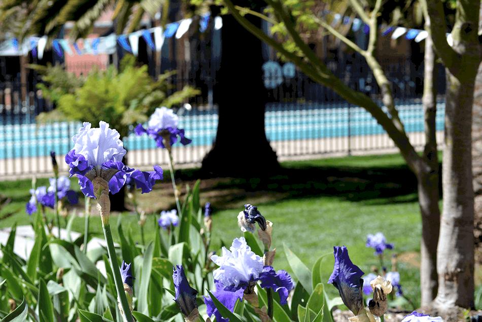 Pixar Tour Visit - 8 Things You Didn't Know About Pixar pixar-pool-flowers