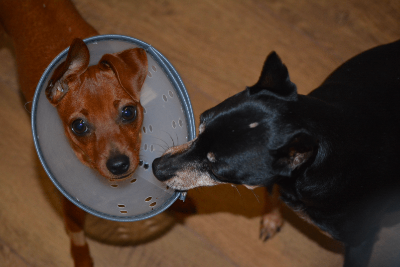 Rainbow and Lucky are now best buddies.  We do miss Penny but we know Lucky loves having a new puppy to play with too!
