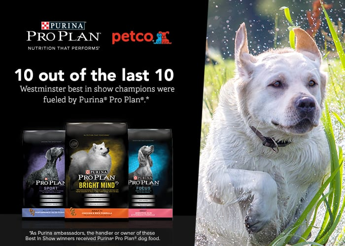 Keeping a Small Dog Active – Purina Pro Plan Coupons + Giveaway