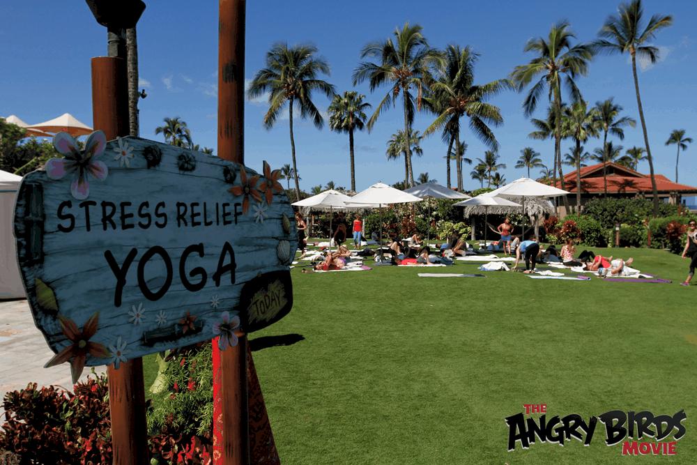 yoga-in-hawaii-angry--birds