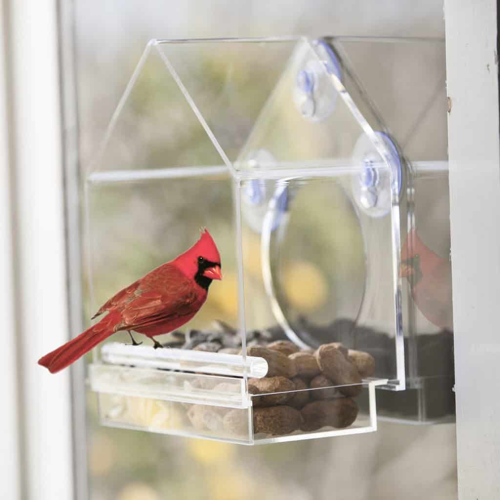 Clear Bird House from Birds-I-View Feeder