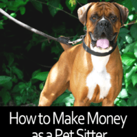 How to Make Money as a Pet Sitter