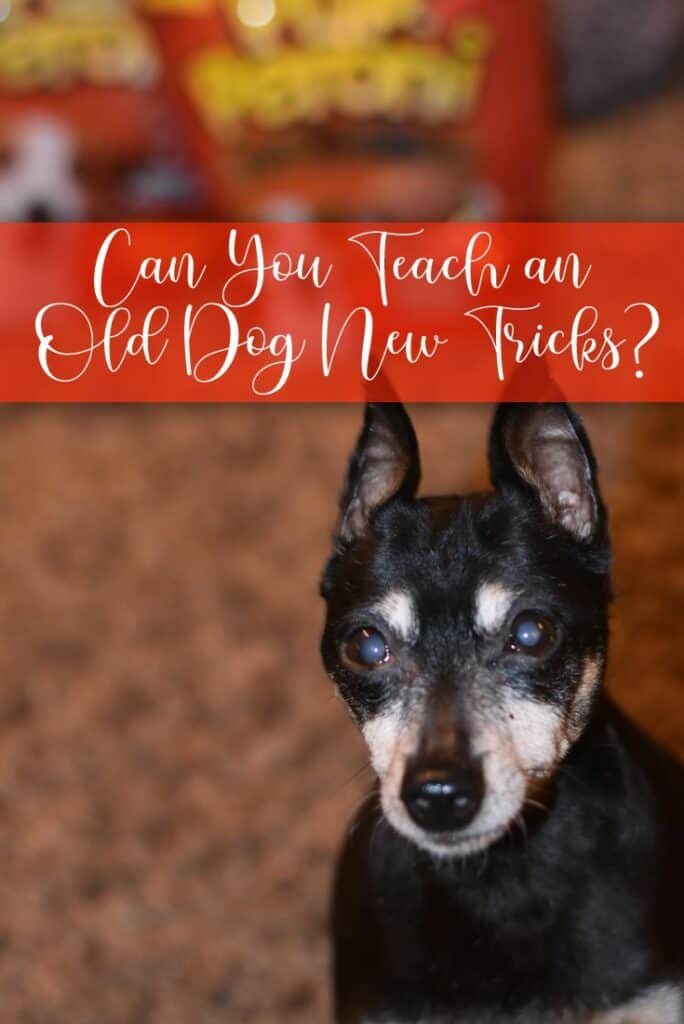 Can You Teach An Old Dog New Tricks?